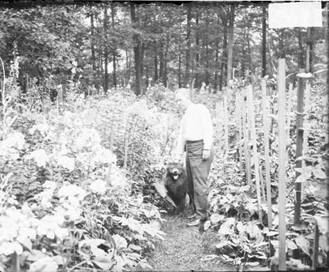 [Attorney and social activist Harold L. Ickes standing with a dog in a garden at his home in Winnetka, Illinois]