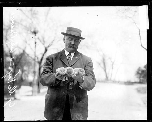 [Cy DeVry, animal keeper at the Lincoln Park Zoo holding four baby beavers]