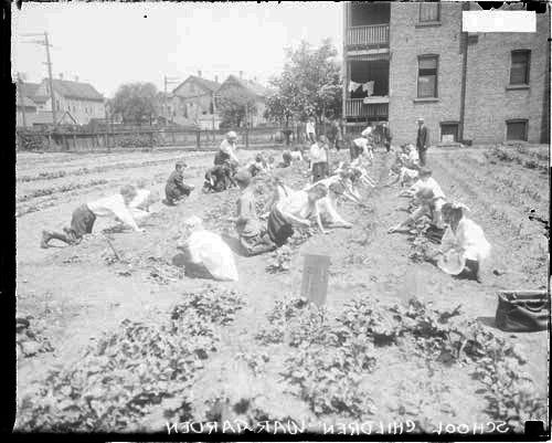 [School children planting crops in large war garden]