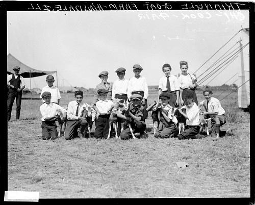 [Boys gathered outside with goats from the Triangle Goat Farm in Hinsdale at the Chi-Cook Fair]