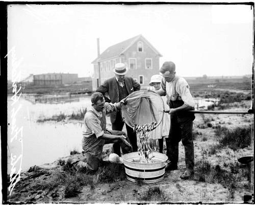 [Two unidentified men emptying fish net at the state fish hatchery in Spring Grove, Illinois]