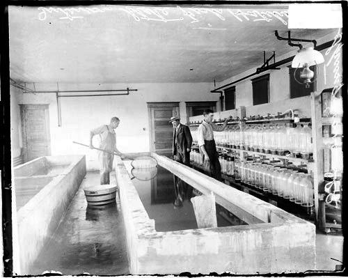 [Unidentified men working in a room at the state fish hatchery in Spring Grove, Illinois]
