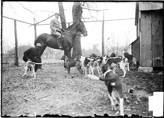 [Fox hunting, hunter on horseback and hunting dogs in a kennel at Midlothian Country Club]