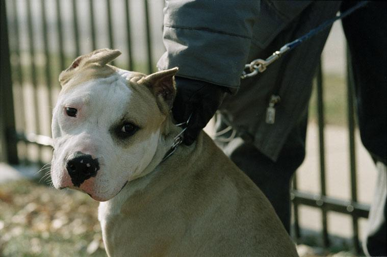 Animal Crimes Division/ dog fighting, image 01