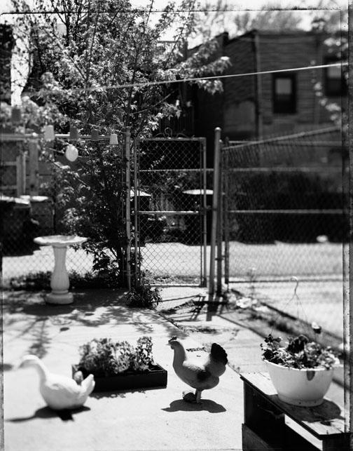 Back Yard, image 08